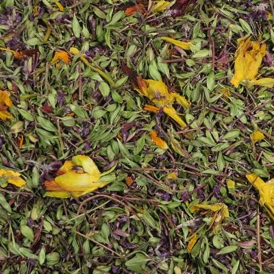 Thyme Grove herbal tea