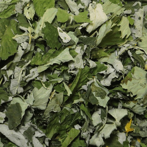 Pinewood Tea herbal tea