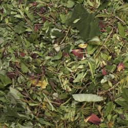 ekologiška arbata būk laimingas